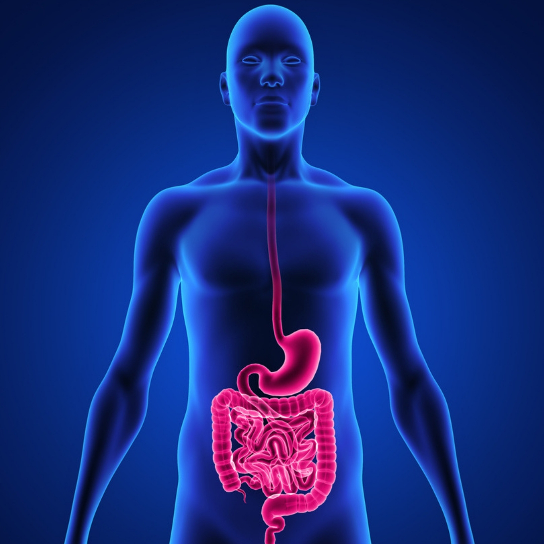 Image showing good digestive health