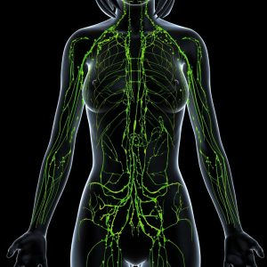 Image of the lymphatic system