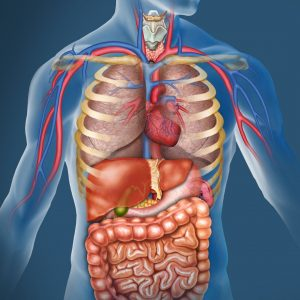 Image of the organs that can cause viscero-somatic pain