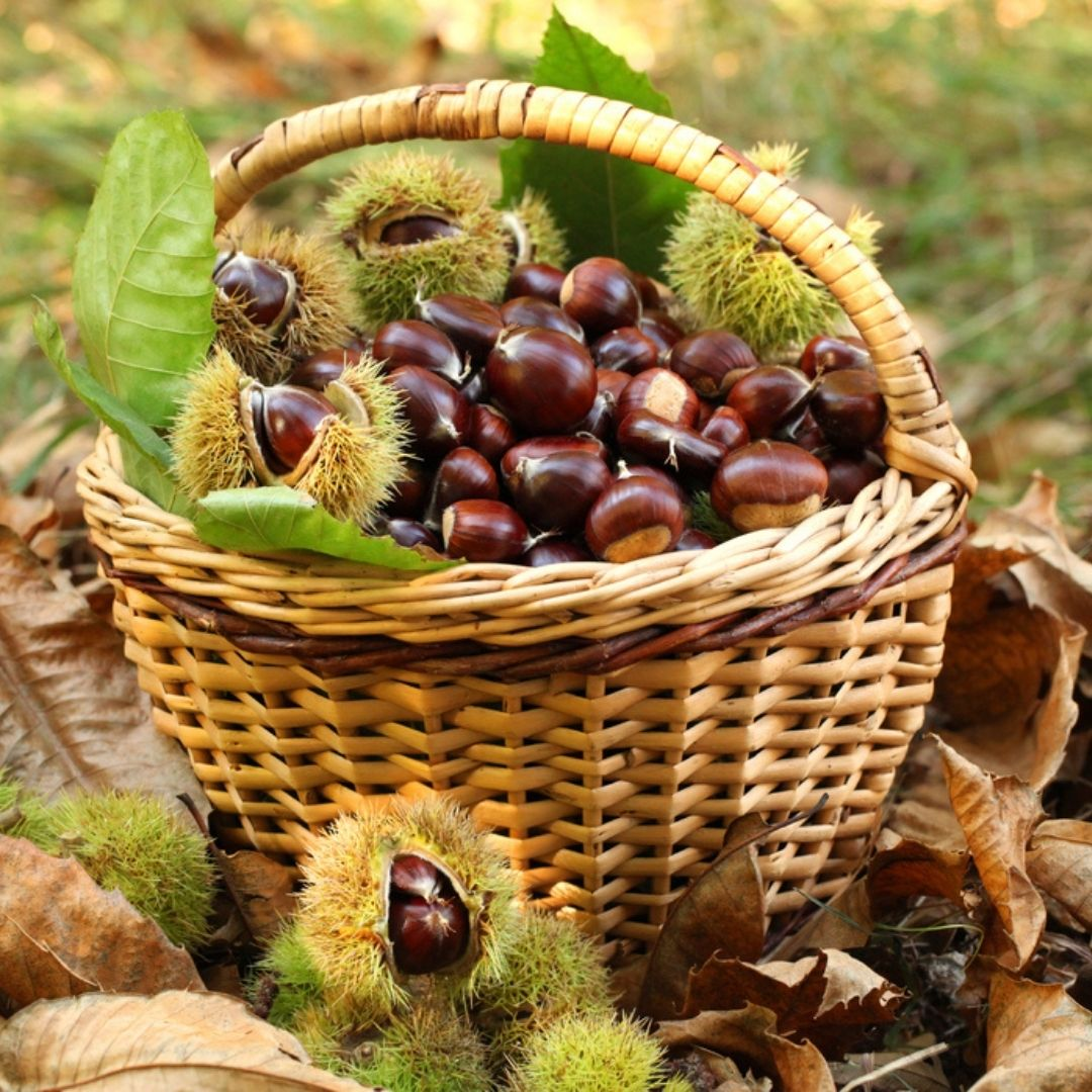An image of a basket of healthy foods